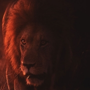 Let Me Remember This - Lion: friend or foe?